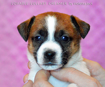 Lovable Lullaby Dreaming Vijolet Jacky