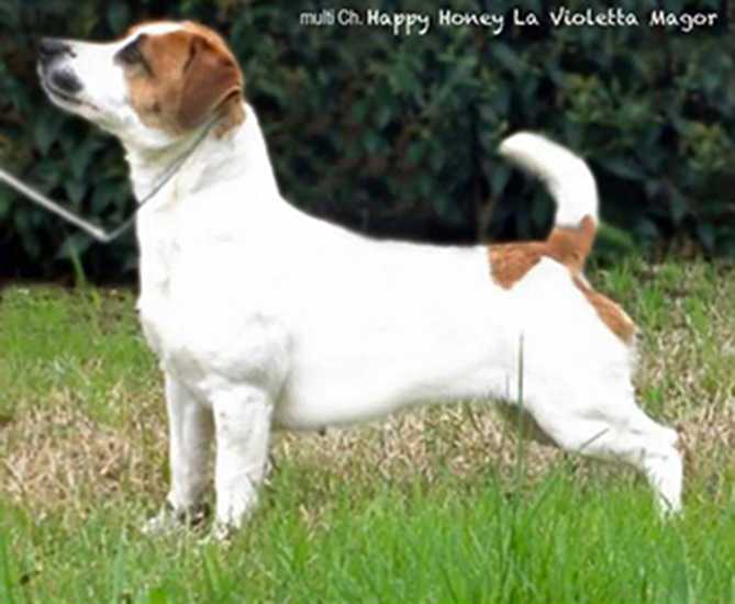 multi Ch/jCh Happy Honey La Violetta Magor