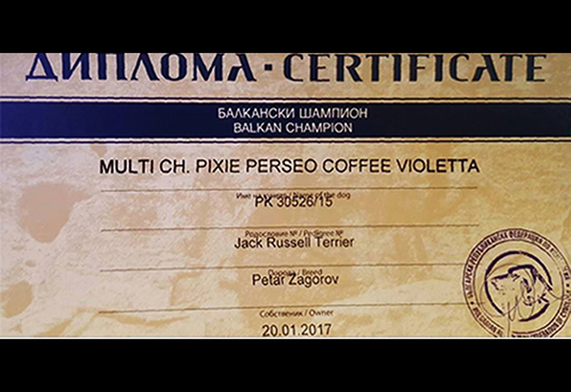 multi jCh Pixie Perseo Coffee Violetta Jack